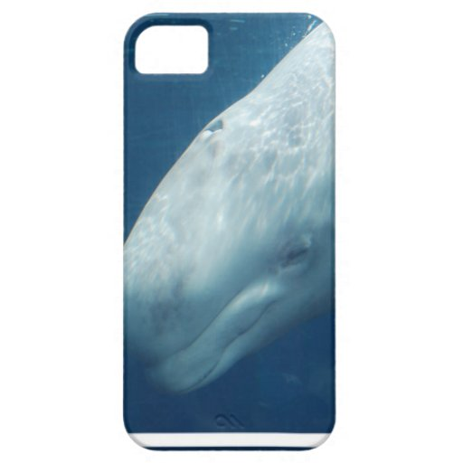 White Whale iPhone 5 Cover