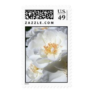 White & white stamps
