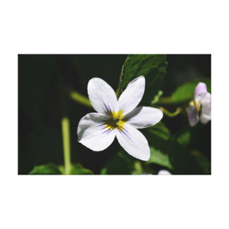 White Wild Flower in the Sandia Mountains canvas Stretched Canvas Prints