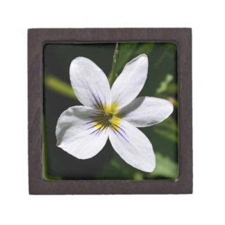 White Wild Flower in the Sandia Mountains gift box Premium Trinket Box