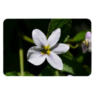 White Wild Flower in the Sandia Mountains Magnet