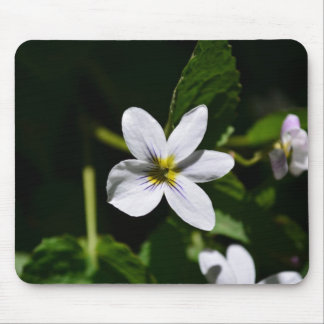 White Wild Flower in the Sandia Mountains Mouse Pad