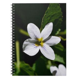White Wild Flower in the Sandia Mountains Notebook