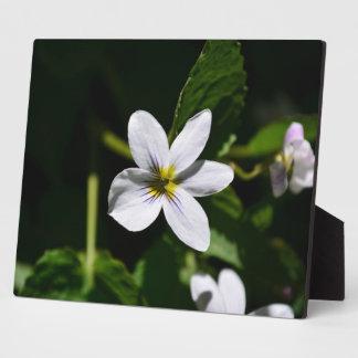 White Wild Flower in the Sandia Mountains Display Plaque