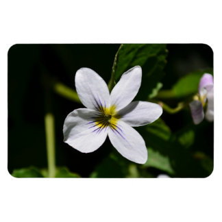 White Wild Flower in the Sandia Mountains Rectangular Magnets