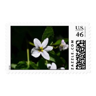White Wild Flower in the Sandia Mountains stamps