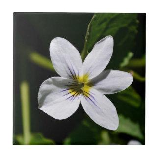 White Wild Flower in the Sandia Mountains tile