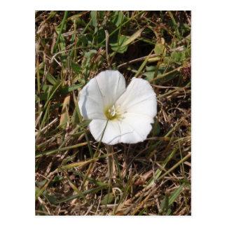 White Wild Flower Postcard