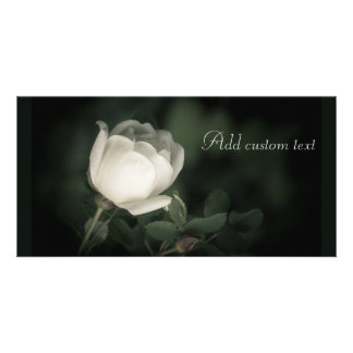 White Wild Rose on a Dark Background. Your Text. Card