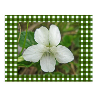 White Wild Violet Coordinating Items Postcard