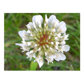 White wildflower blank postcard