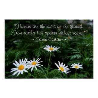 White Wildflowers Poster