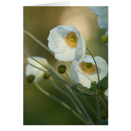 white windflowers in a natural display card