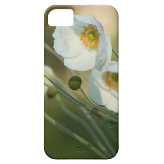 white windflowers in a natural display iPhone 5 covers