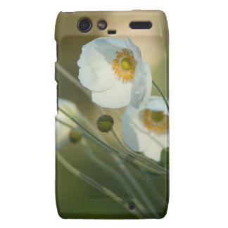 white windflowers in a natural display motorola droid RAZR cover