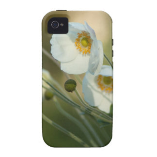 white windflowers in a natural display iPhone 4 cases