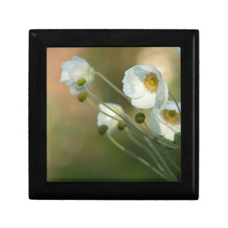 white windflowers in a natural display gift box