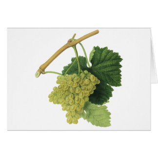 White Wine Grapes on the Vine, Vintage Food Fruit Card
