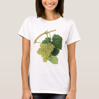 White Wine Grapes on the Vine, Vintage Food Fruit T-Shirt