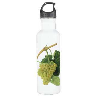 White Wine Grapes on the Vine, Vintage Food Fruit Water Bottle