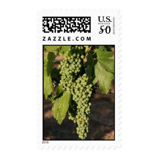 White Wine Grapes Postage