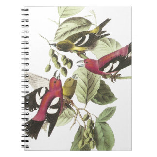 White-winged Crossbill Spiral Note Books