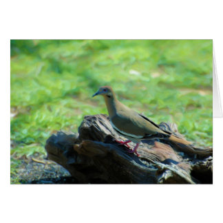 White Winged Dove Greeting Cards