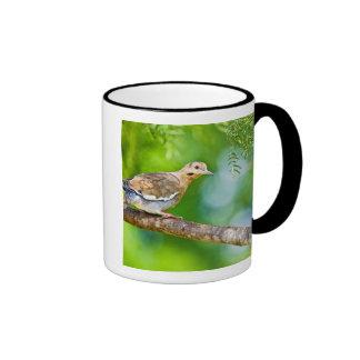 White-winged Dove Zenaida asiatica) adult, Ringer Coffee Mug