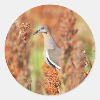 White-Winged Dove (Zenaida Asiatica) Perched Classic Round Sticker