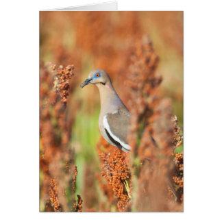 White-Winged Dove (Zenaida Asiatica) Perched Greeting Card