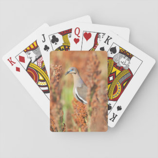 White-Winged Dove (Zenaida Asiatica) Perched Playing Cards