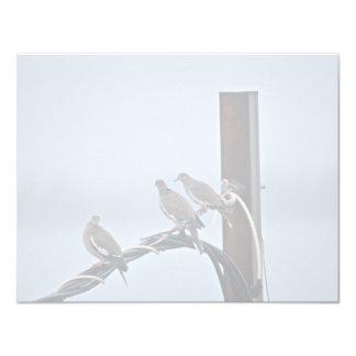 White-winged Doves 4.25x5.5 Paper Invitation Card