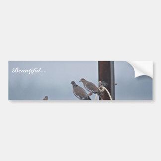White-winged Doves Bumper Sticker