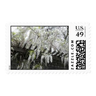 White Wisteria Stamps