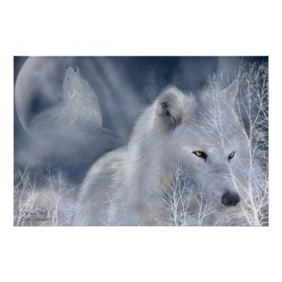 Wolf - Page 3 White_wolf_art_poster-p228740125012268093qzz0_400