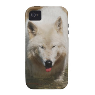 White Wolf Vibe iPhone 4 Covers
