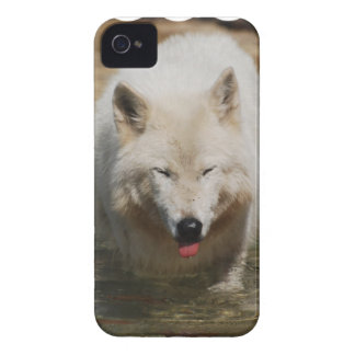 White Wolf Case-Mate iPhone 4 Cases