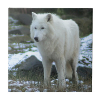 White Wolf en invierno Azulejo Cuadrado Pequeño