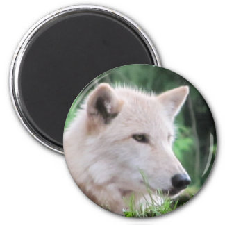 White Wolf Face Close Up 2 Inch Round Magnet