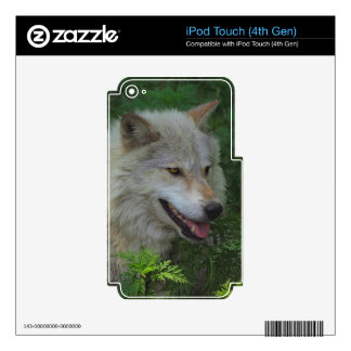 White Wolf Grey Wolf Wild Animal Skins Skins For iPod Touch 4G