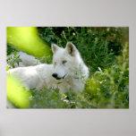 White Wolf Impresiones