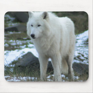 White Wolf in Winter Mouse Pad