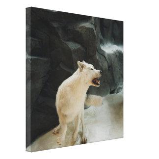 White Wolf Impresión En Tela