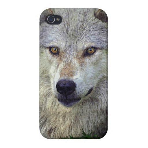 White Wolf, lobo gris, animal salvaje, canino iPhone 4/4S Fundas