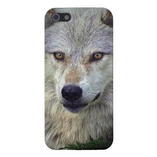 White Wolf, lobo gris, animal salvaje, canino iPhone 5 Funda