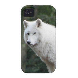 White Wolf salvaje iPhone 4 Fundas