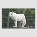 White Wolf salvaje Pegatina Rectangular