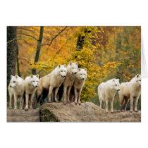 White wolf - snow wolf - wolf animal