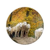 White wolf - snow wolf - wolf animal dinner plate