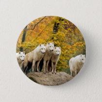 White wolf - snow wolf - wolf animal pinback button